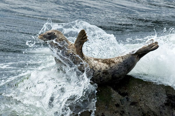 1D3_9365-Seal-Splash-Blog