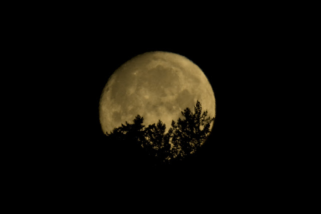 Waxing Frost Moon Sets over Vancouver Island